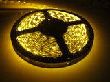 LED 지구 유연한 5050 SMD 5m