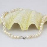 Collar nupcial poner crema de la perla del AA- de la dimensión de una variable redonda de Snh 7-8m m