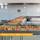 Matériel galvanisé à chaud de volaille de rangées du bâti 5 du matériau H pour les pondeuses/poulet de couches/oeuf