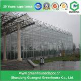 Estufa de vidro com construção de aço galvanizada para Growing da flor e de vegetais