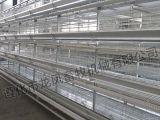 6 صفّ من آليّة دجاجة قفص مع [إيس9001]