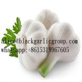 Aglio bianco ed aglio bianco normale
