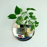 Mini bacia acrílica redonda fixada na parede dos peixes