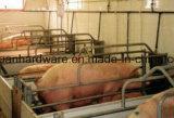 돼지 담 동물은 감금한다 돼지 (공장)를 위한 /Farrowing 크레이트를