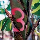 شجرة علامة [سبري بينت] علامة خشبيّة, لصف تأشير [سبري بينت]