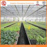 الاحتباس الحراري الزراعة متعدد سبان زجاج لزراعة