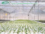 Serre chaude végétale hydroponique avec la couverture de film