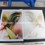 Быстрый сухой высокоскоростной размер крена бумаги Transfe жары сублимации
