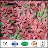 Spätester Entwurfs-spezielle rote künstliche Blatt-Pflanzen für Garten-Dekoration