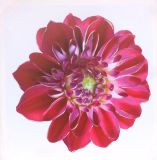 Heißer Verkaufs-schönes Blumen-Segeltuch-Drucken für Hauptdekoration