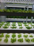 Blumen-Bearbeitung-hohe Leistung LED wachsen Licht
