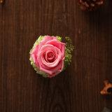 La promoción preservó la flor para el regalo de día de fiesta