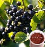 Polifenol negro antioxidante fuerte 10%-30% del extracto del Chokeberry; ~ el 25% de la antocianidina el 1%