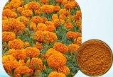 Augen-Gesundheits-Ringelblume-Blumen-Auszug-Lutein 5%~80%
