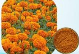 Lutein 5%~80% do extrato da flor do Marigold da saúde do olho