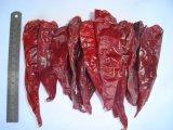 Piments rouges américains secs