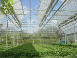 Niedrige Kosten PC Blatt-Gemüse-Gewächshaus