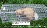 Menschliches Kaninchen-Ratte-Nerz-graues Eichhörnchen-kleine Waschbär-Opossum-Katze, die lebendes Tier-Rahmen-Falle faltet