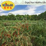 Высокое качество органическое Goji Lbp мушмулы