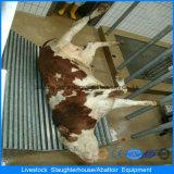 Machine de Slaughering dans la Chambre de volaille avec la construction automatique de Chambre de matériel et de construction préfabriquée d'ensemble complet