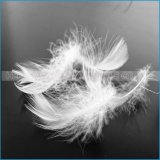 Vente en gros de haute qualité lavé White Goose Feather