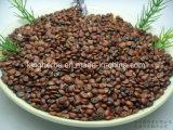 Estratto del seme della data della spina dorsale; Estratto vulgaris delle saponine 2% Zizyphus