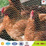 1/4 인치 스테인리스 닭 6각형 철망사
