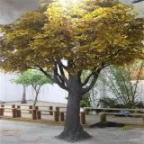 كبيرة زخرفيّة [جنكغو] شجرة في باب وخارجيّة