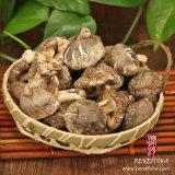 (얇은) 마른 버섯 검정 표면