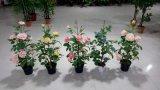 Bonsai variopinti del fiore della Rosa della seta artificiale del fiore artificiale di alta qualità