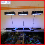 Stupore! Indicatore luminoso controllabile dell'acquario di Programble 165W LED di tramonto di alba