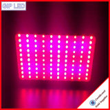 300W 600W 900W 1200W СИД растут свет сделанный в Китае