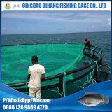 Peixes do Tilapia que levantam com a gaiola de flutuação dos peixes