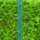 Het uitstekende Roestvrije Netwerk van de Draad Hexagoanl/het Opleveren voor het Netwerk van de Kip