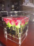 Großverkauf-heiße Verkaufs-Acrylrosen-Kasten