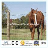 Rete fissa animale galvanizzata di allegato della rete fissa del cavallo del metallo
