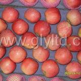 Goldenes Supplier von chinesischem Origin (Rot: 80%) Frischer FUJI Apple