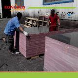 La película de la base de la madera dura del eucalipto del álamo hizo frente a la madera contrachapada para la construcción