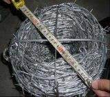 Anti filo del punto della parete di ascensione da vendere (ISO9001)
