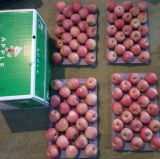 新しい穀物Qinguan Appleは来ている