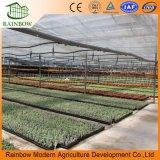 Ventilador de escape, sistemas de cultivo hidropónico, invernadero de plástico de película de po para el cultivo de fresa