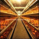 H печатает клетке цыпленка Breeding оборудование на машинке цыплятины системы