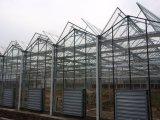 Invernadero de cristal grande agrícola para la seta/las rosas/los tomates con el marco de acero fuerte