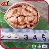 Nueces finas del shell en shell