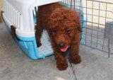 Jaula de la compañía aérea/del perro del animal doméstico de Promation