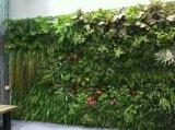 Piante di buona qualità e fiori artificiali della parete verticale Gu-Mx-Green-Wall008