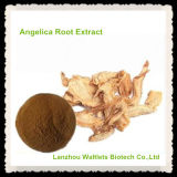 Extracto natural de la raíz de la angélica de la alta calidad
