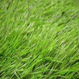 Hierba artificial de la forma para el Sb de China Forestgrass del balompié del fútbol