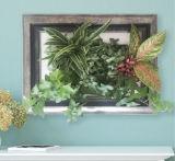 ホーム使用の緑プラント小型壁