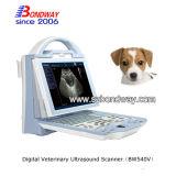 Ultra-som médico para o veterinário com Porbe